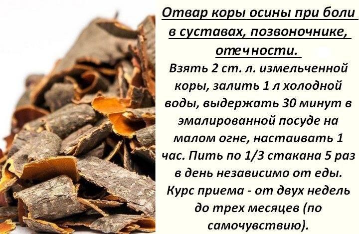 Кора осины, её лечебная сила и польза для здоровья