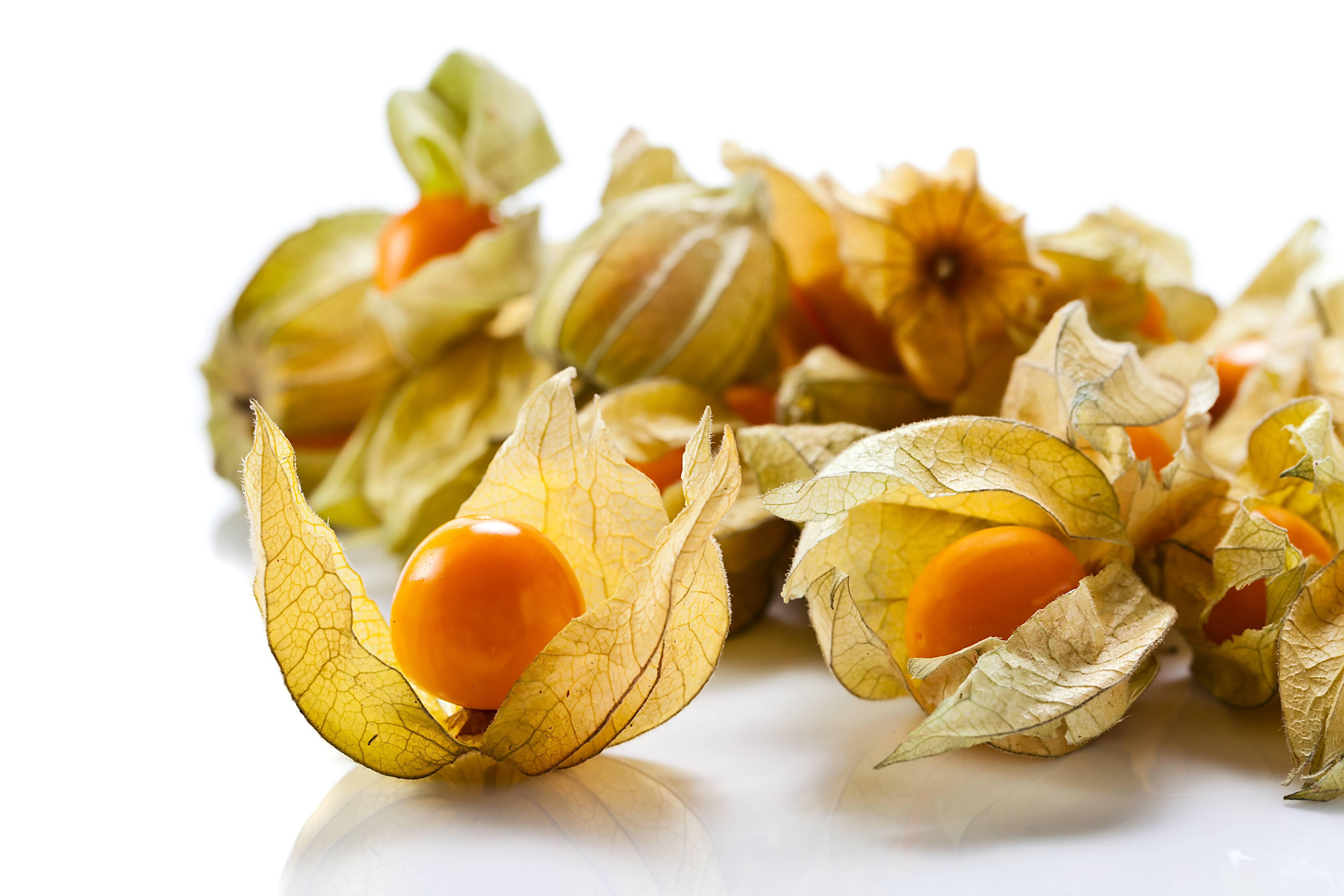 Физалис — полезные свойства, как употреблять в пищу и вред для здоровья