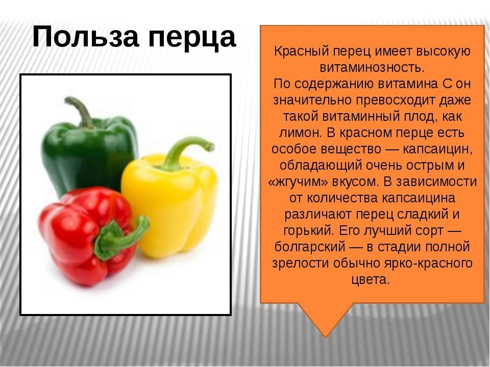 В чем польза и вред красного стручкового перца: состав плодов и противопоказания к употреблению в пищу