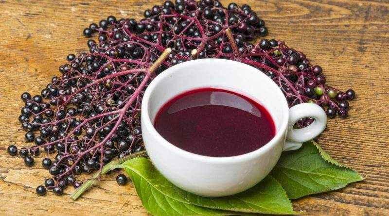 Бузина черная – полезные свойства и противопоказания, народные рецепты