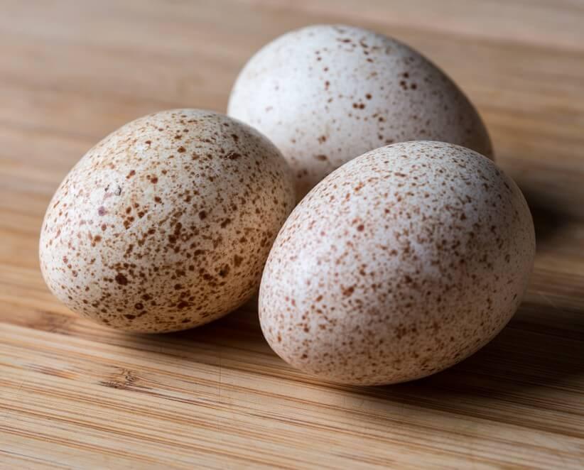 Яйцо индюшки польза и вред