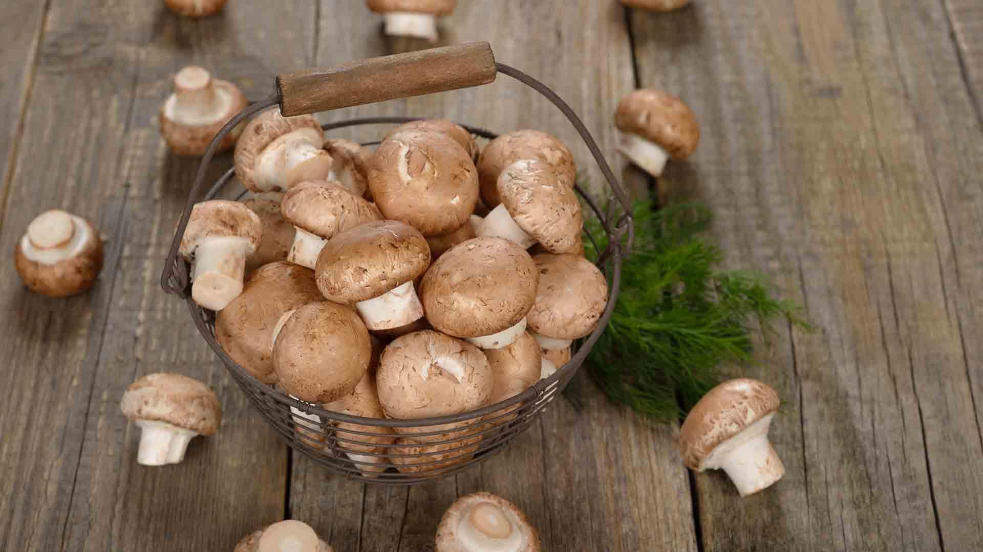 Шиитаке: характеристика гриба и способы выращивания