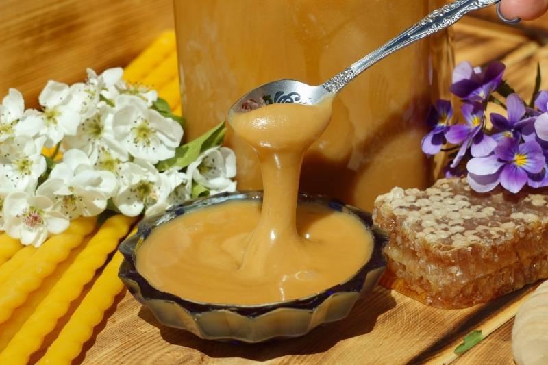 Полезные свойства гречишного меда и противопоказания к употреблению