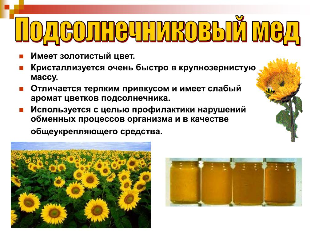 Польза и применение в лечебных целях меда подсолнечника