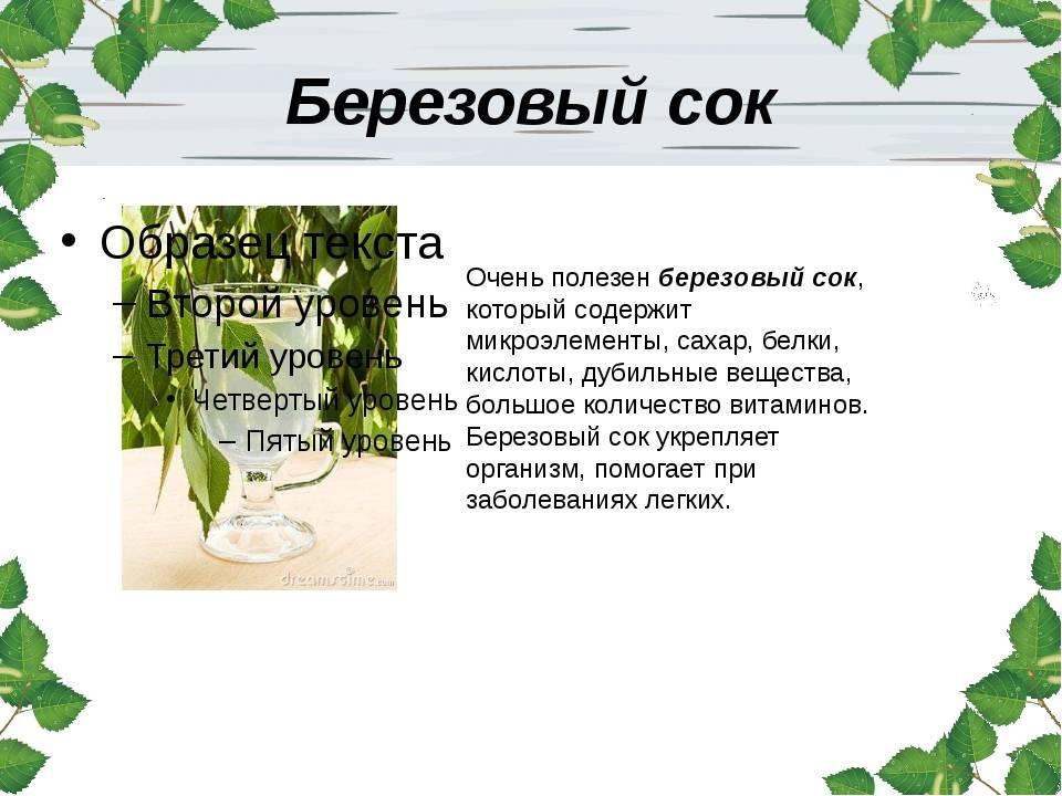 Лечебные свойства березового сока, способы его заготовки и хранения
