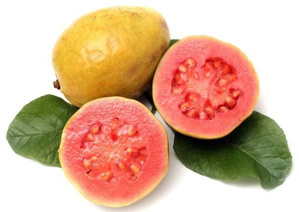 Гуава: польза и вред для организма человека, калорийность
