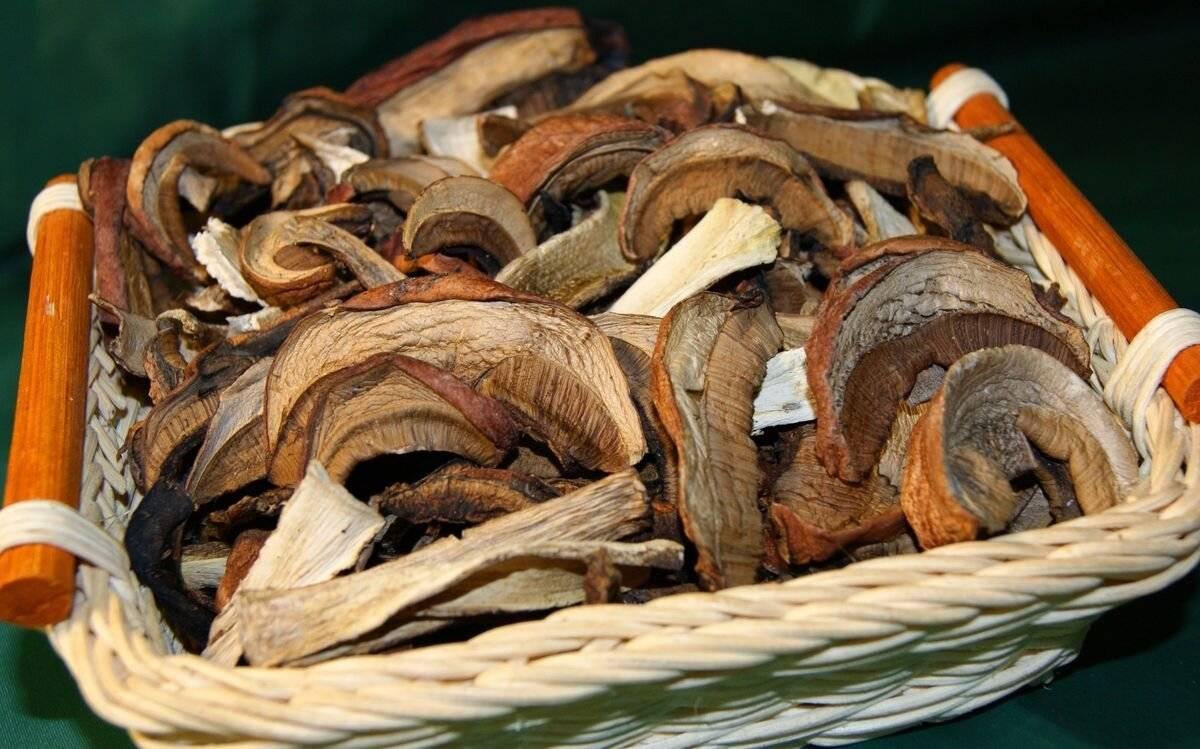 Какие грибы сушат чаще всего и почему не все виды для этого пригодны