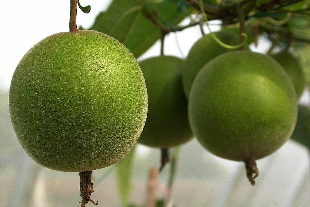 Араза (фрукт): описание, состав и польза