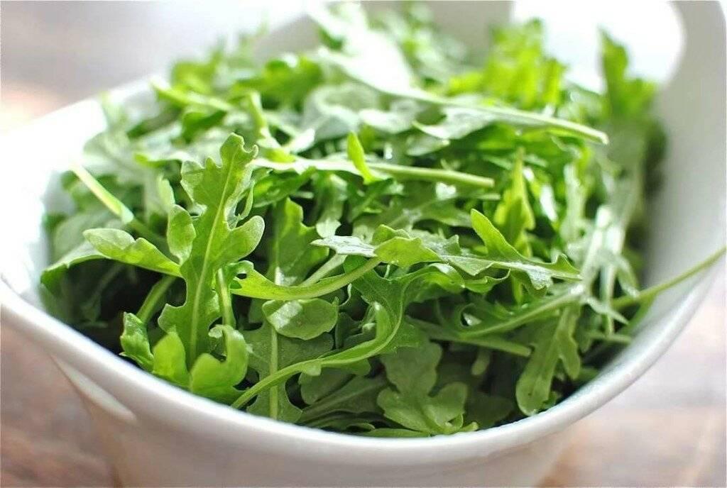 Салат руккола— польза ивред, применение для здоровья икрасоты