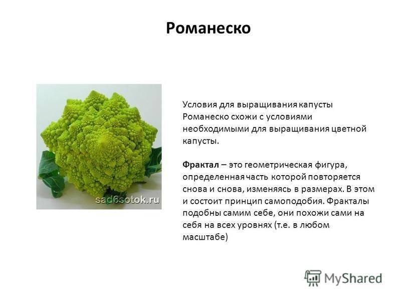 Капуста романеско: позитивные свойства, предостережения врачей, способы приготовления
