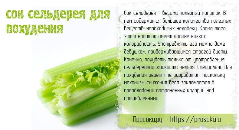 Полезные свойства и противопоказания сока сельдерея