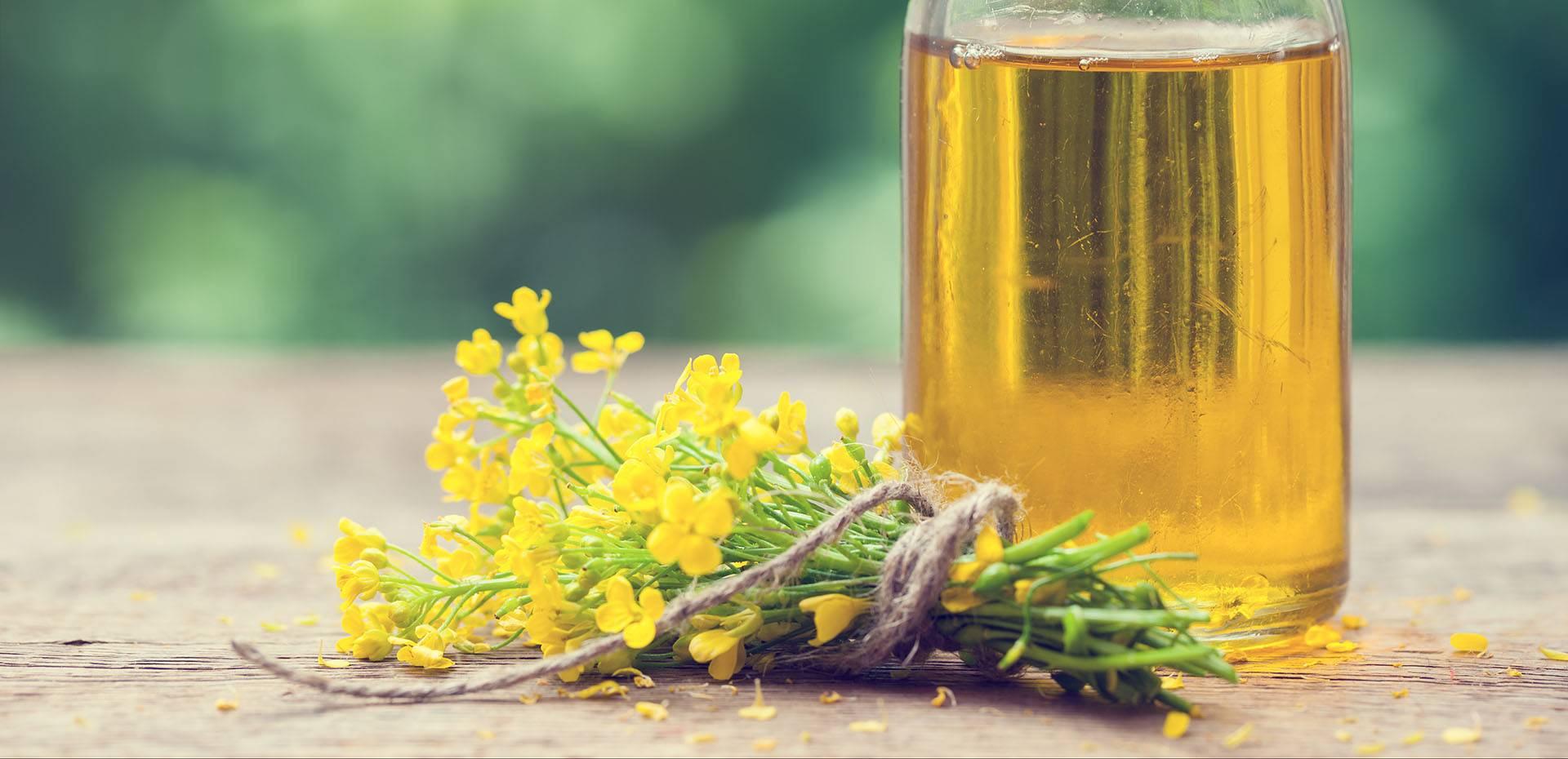Какая польза и вред рапсового масла для человека?