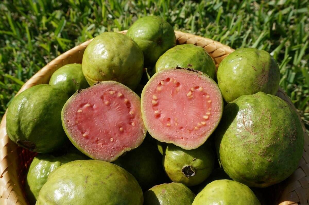 Гуава: ценный диетический продукт