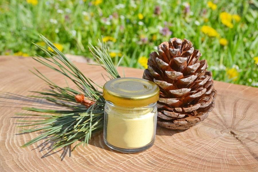 Сосновые шишки: лечебные свойства и противопоказания, применение
