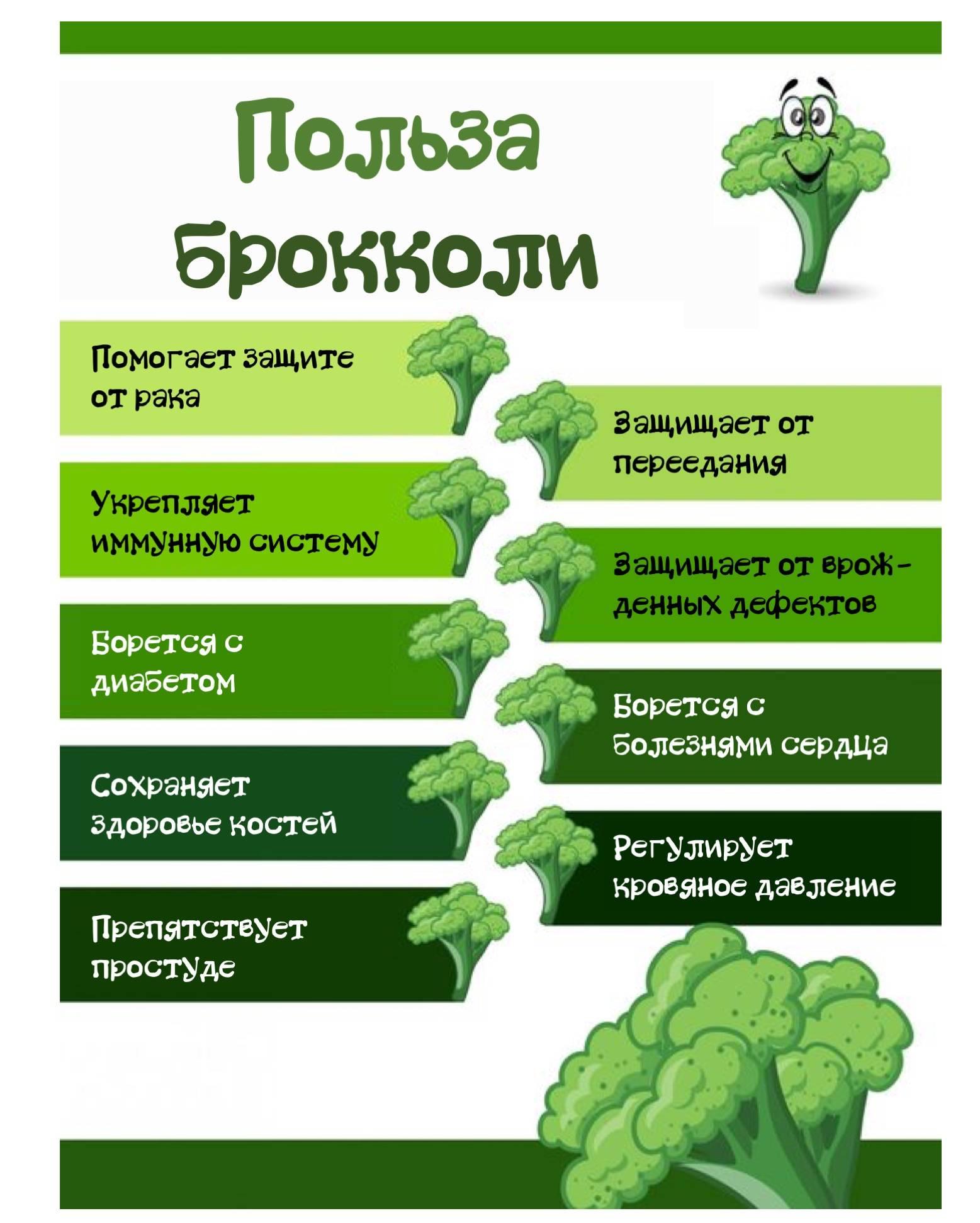 Капуста брокколи — польза и вред для организма