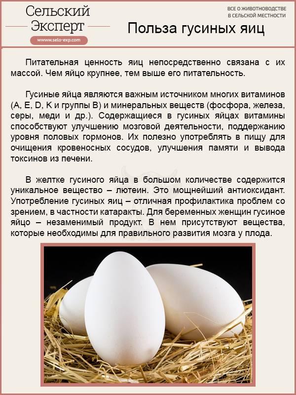 Какие яйца полезнее гусиные или куриные. вред продукта и противопоказания к его употреблению