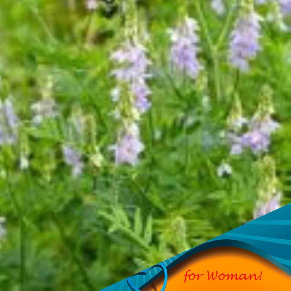 Аконит посадка и уход в открытом грунте лечебные свойства