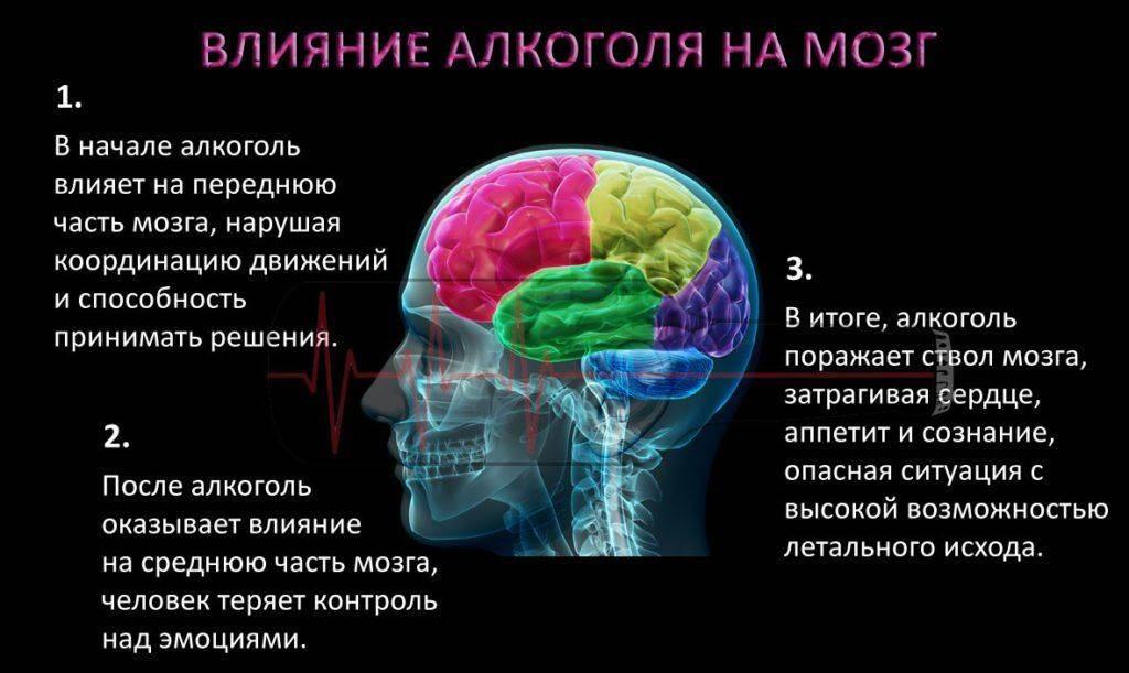 Как алкоголь воздействует на мозг