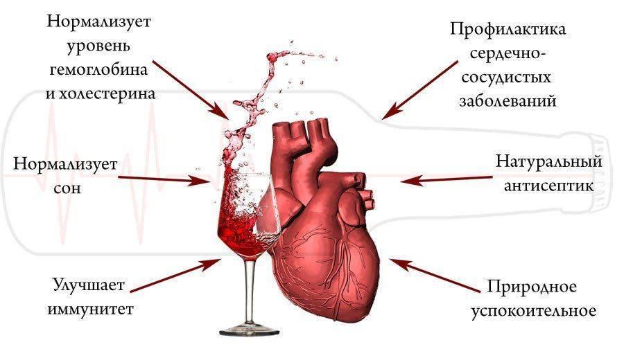 Как вино действует на сердце?