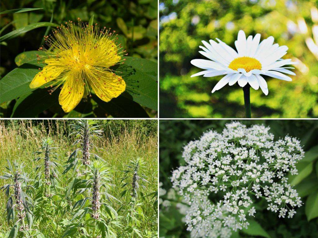 Ингредиенты цветочного чая