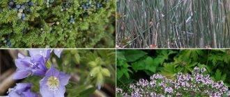 Разные растения против алкоголя