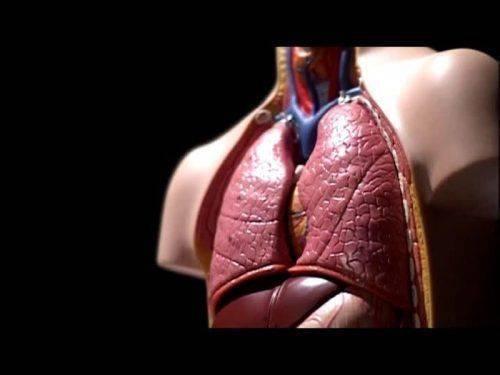 Болезни дыхательных органов