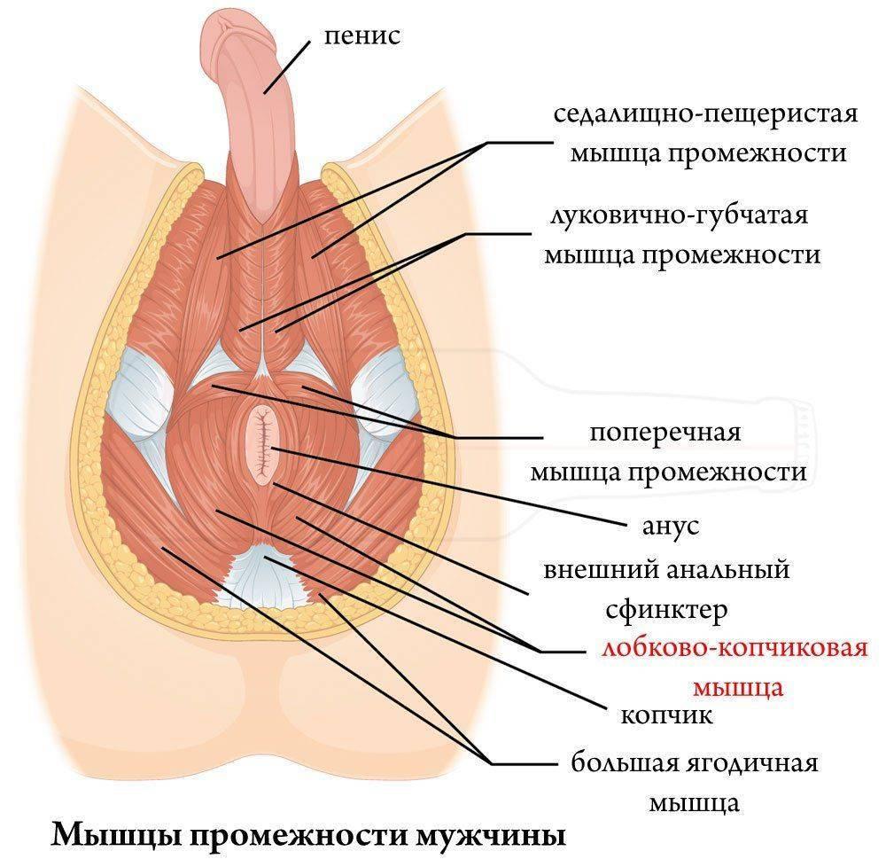 Упражнения Кегеля после родов: техника выполнения, показания