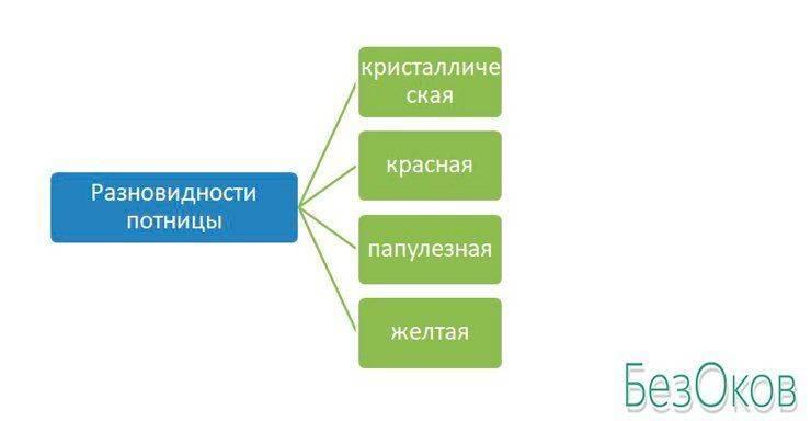 Разновидности потницы