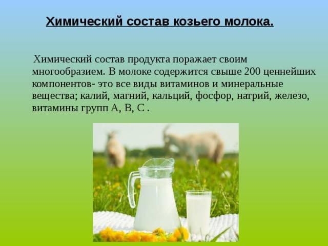 Как выбрать козье молоко? польза и вред, применение в косметологии, при беременности и похудении