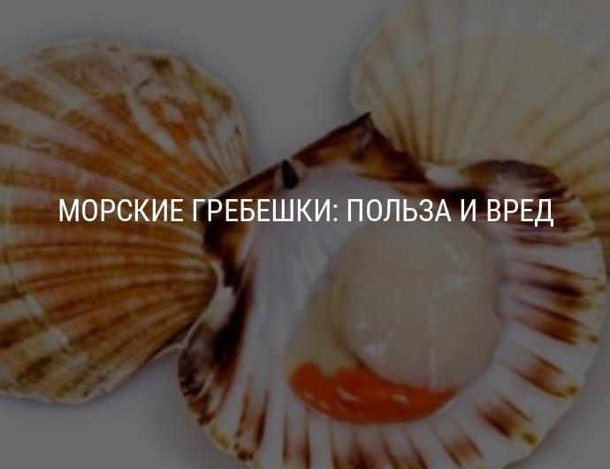 Морской гребешок, польза и вред для организма человека