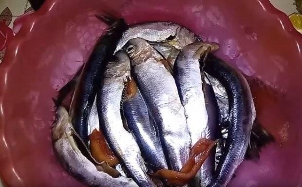 Рыба пеленгас: польза, калорийность | вкусные  рецепты