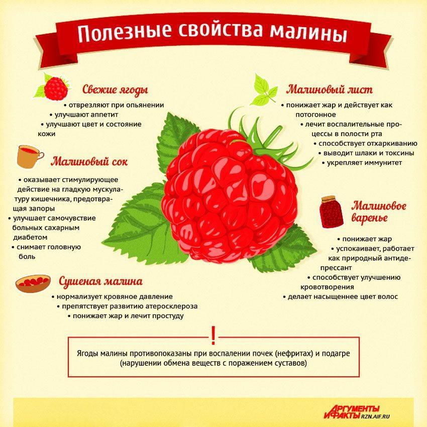 Свойства ягод малины, польза и вред для здоровья