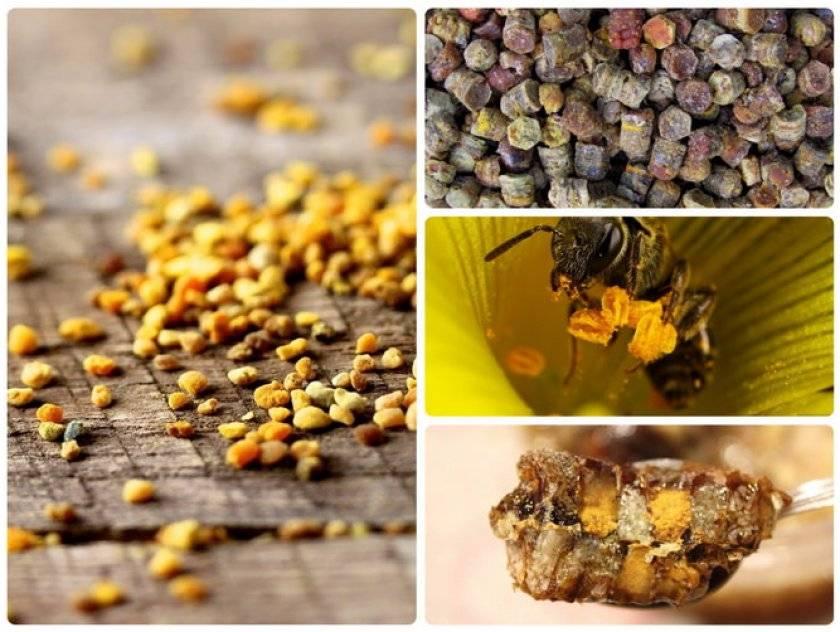Польза применения пчелиной пыльцы