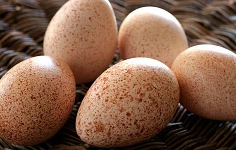 Индюшиные яйца: их польза и вред. можно ли их есть?
