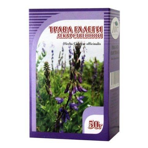 Галега (трава): лечебные свойства, противопоказания, рецепты