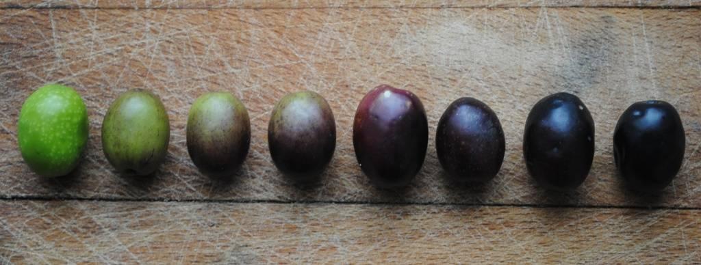 Маслины (оливки): в чём разница, польза и вред