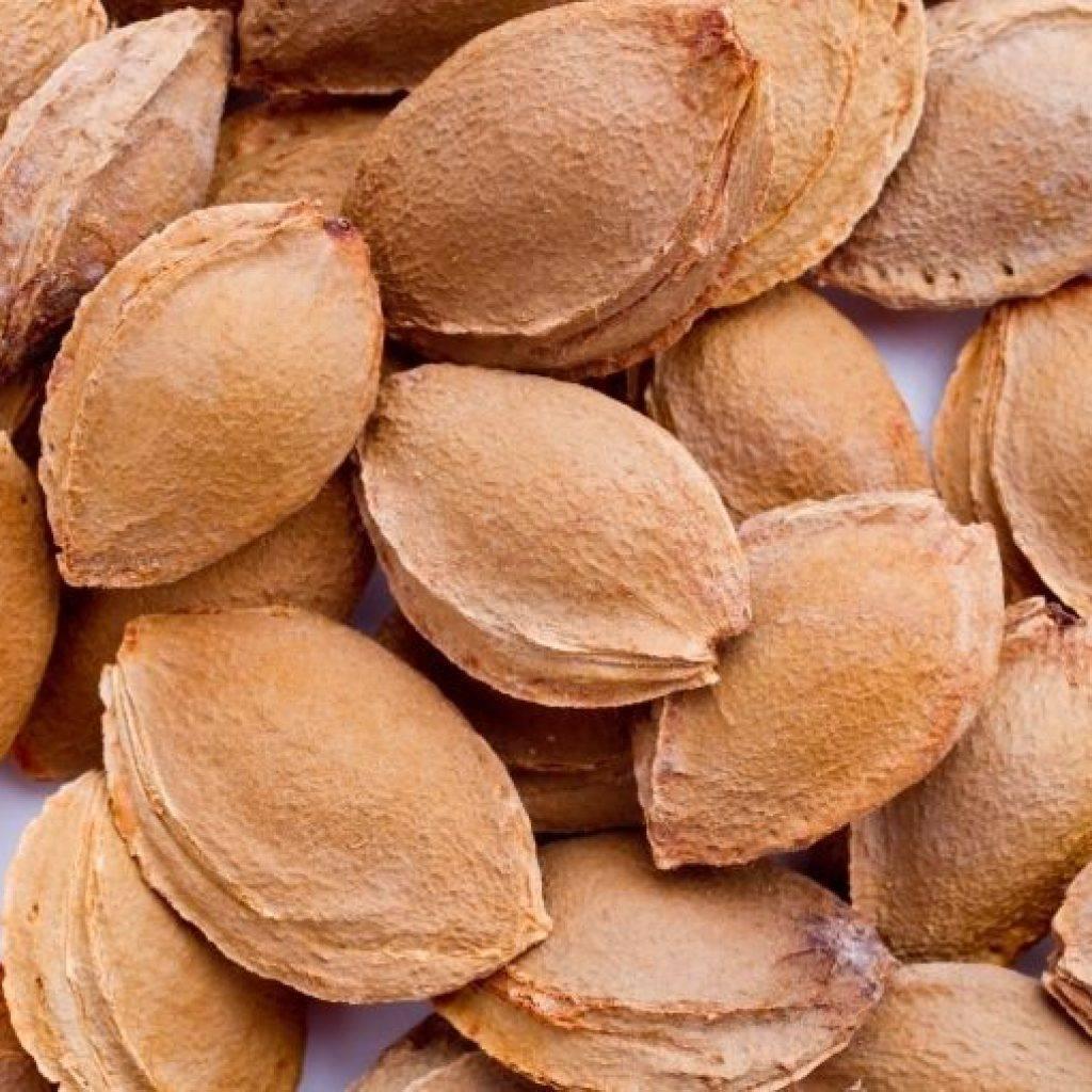 В чем полезные свойства абрикосовых косточек и есть ли противопоказания: основные факты о горьких ядрах