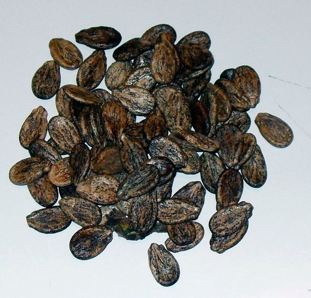 Арбузные семечки - польза и вред для женщин и мужчин