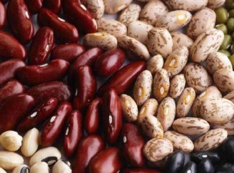 Фасоль: польза и вред для здоровья человека разных сортов бобовой культуры