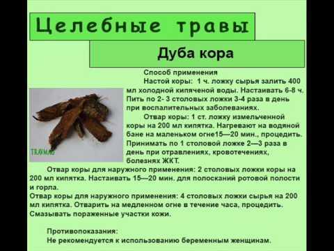 Кора дуба: лечебные свойства, показания и противопоказания, рецепты народных средств