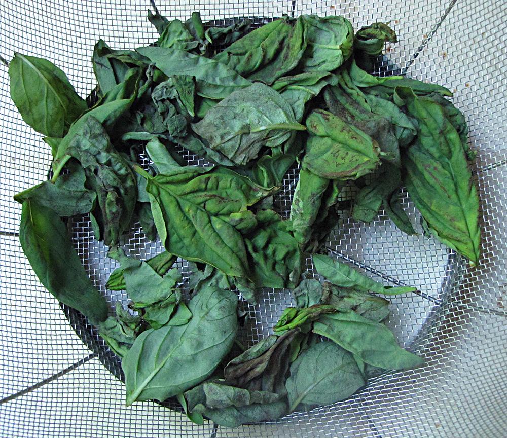 Как засушить базилик. как сушить ароматный базилик в домашних условиях