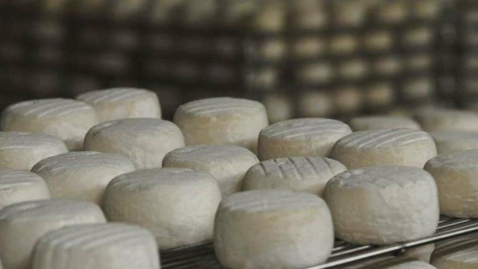 Адыгейский сыр: польза и вред продукта