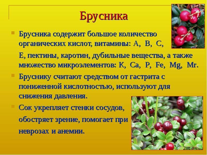 Костяника полезные свойства и противопоказания