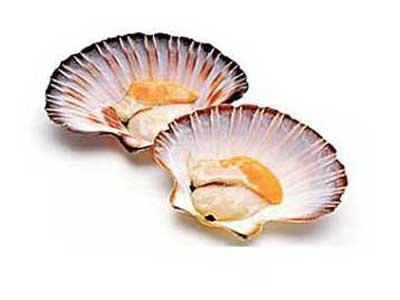 Чем полезны морские гребешки