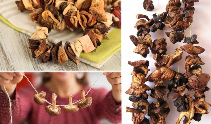 Как хранить сушеные грибы