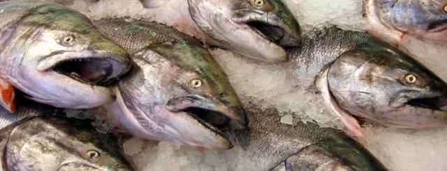 Что за рыба судак польза