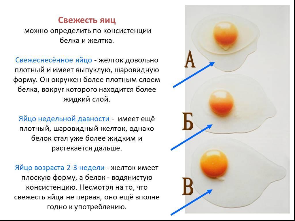 Как определить свежесть куриных яиц в домашних условиях? способы проверки, полезные рекомендации