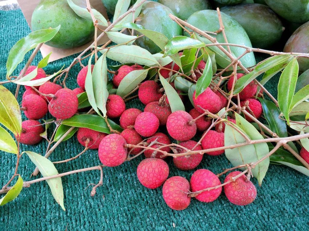 Что это за фрукт кумкват и как он влияет на гормон радости