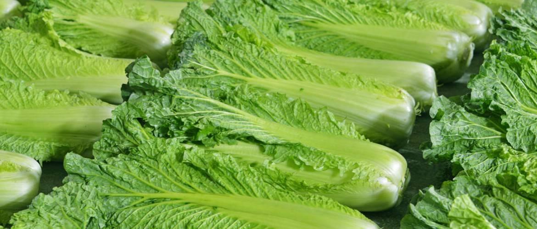 Польза пекинской капусты для здоровья, ее свойства и рецепты приготовления