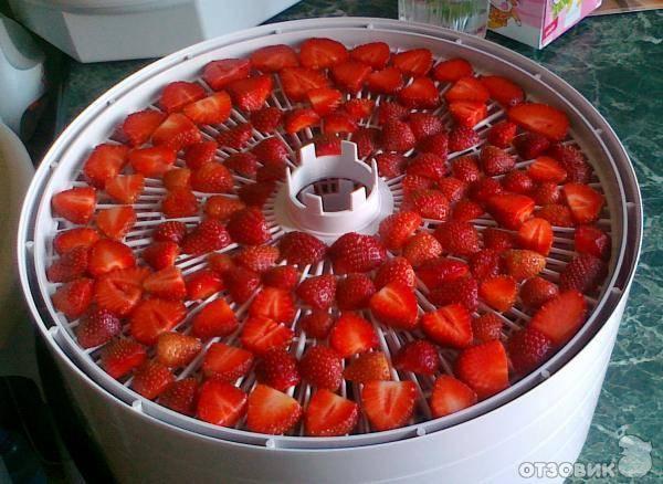 Как засушить клубнику для чая. как сушить землянику в духовке. как сушить плоды земляники в аэрогриле